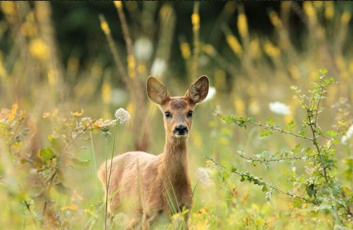 Rencontres animalières en forêt de Fontainebleau, profil chez Overblog